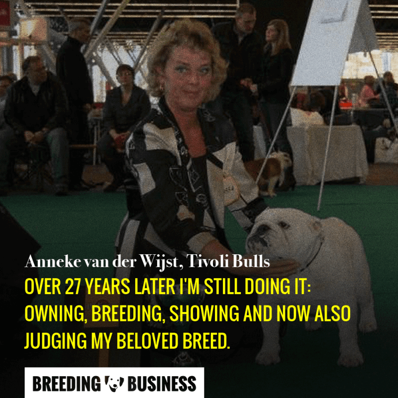 Anneke van der Wijst has experience with breeding, showing, and judging English Bulldogs.