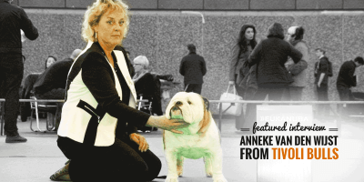 Interview with Anneke van der Wijst, English Bulldog breeder at Tivoli Bulls