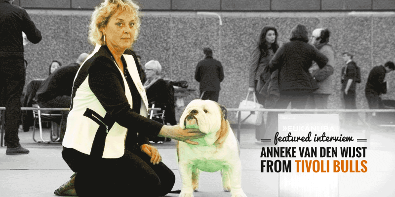 Interview with Anneke van der Wijst, English Bulldog breeder at Tivoli Bulls