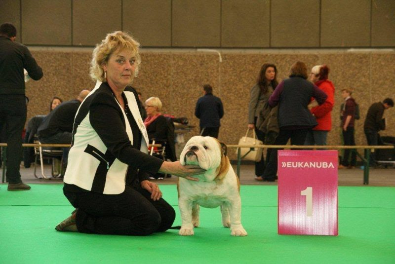 anneke (from tivoli bulls) at a dog show