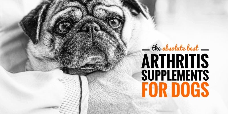 best dog arthritis supplements