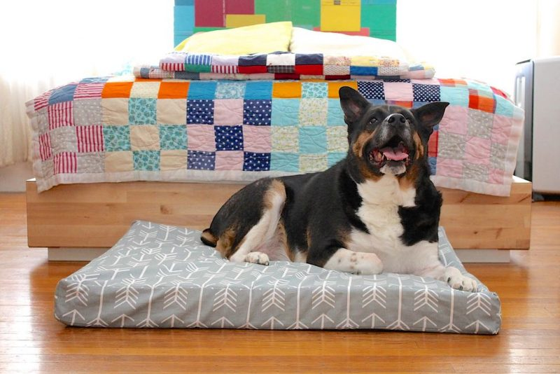 diy dog bed mattress toppers