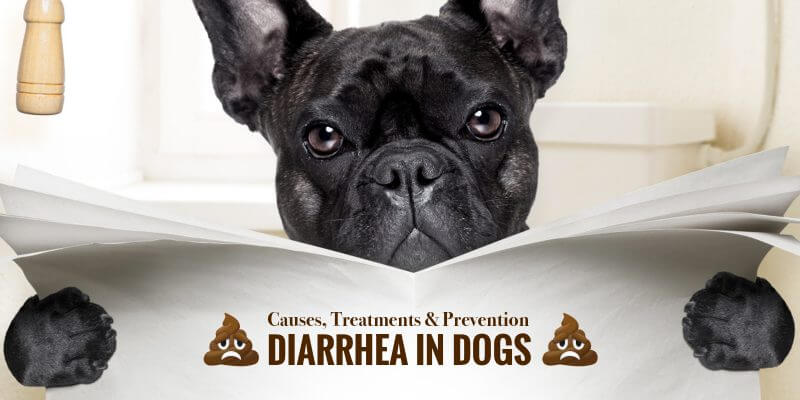 Diarrhea in Dogs