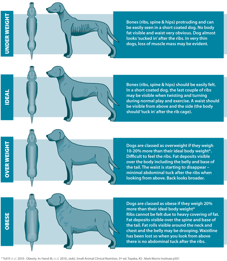 Infographic: how to check dogs weight?