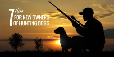 7 Tips for New Owners of Hunting Dogs