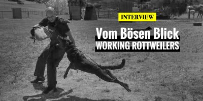 Interview with Dana McMahan — Rottweiler breeder at Vom Bösen Blick