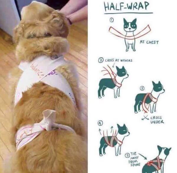 diy dog anxiety wrap