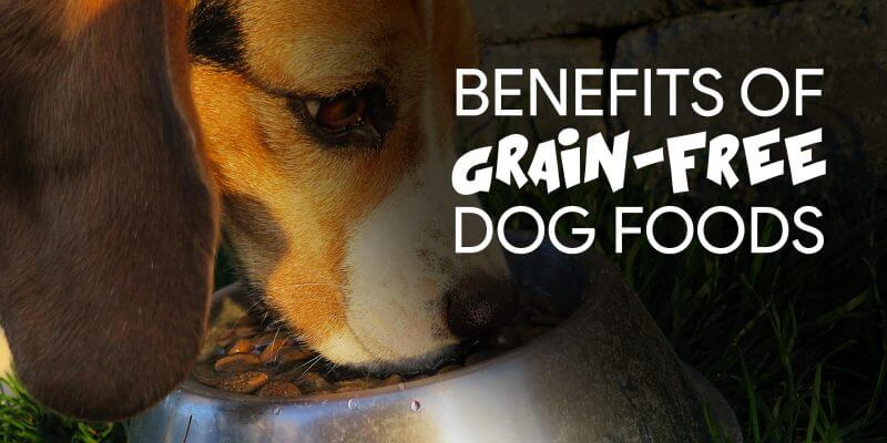 Benefits of a Grain-Free Diet for Dogs
