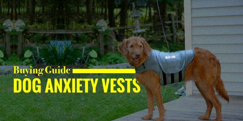 5 Best Dog Anxiety Vests Thundershirt Akc Diy Buying Guide