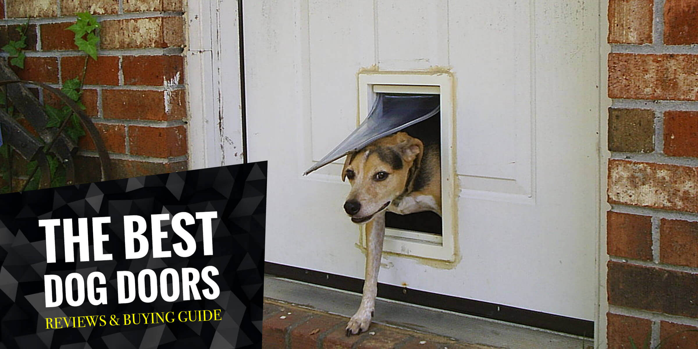 5 Best Dog Doors In 2018 Regular Electronic Sliding Etc