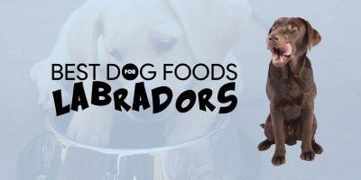 Best Dog Foods For Labradors