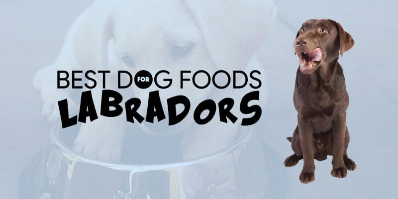 Top 6 Best Dog Foods For Labradors