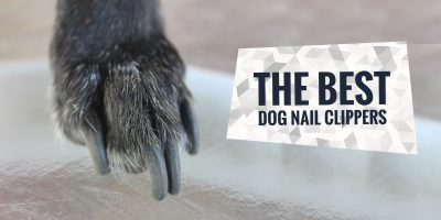 5 Best Dog Nail Clippers & Grinders Reviewed + Buying Guide