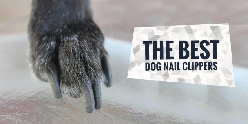 Best Dog Nail Clippers & Grinders