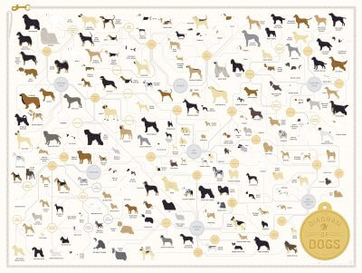 List of Dog Breeds (chart)