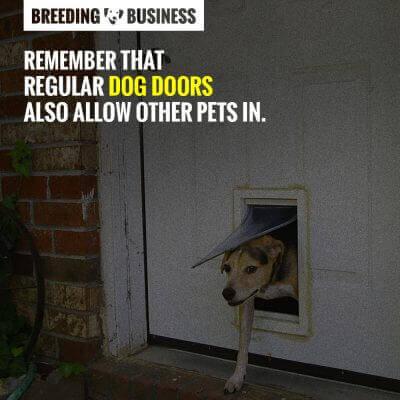 dog doors review