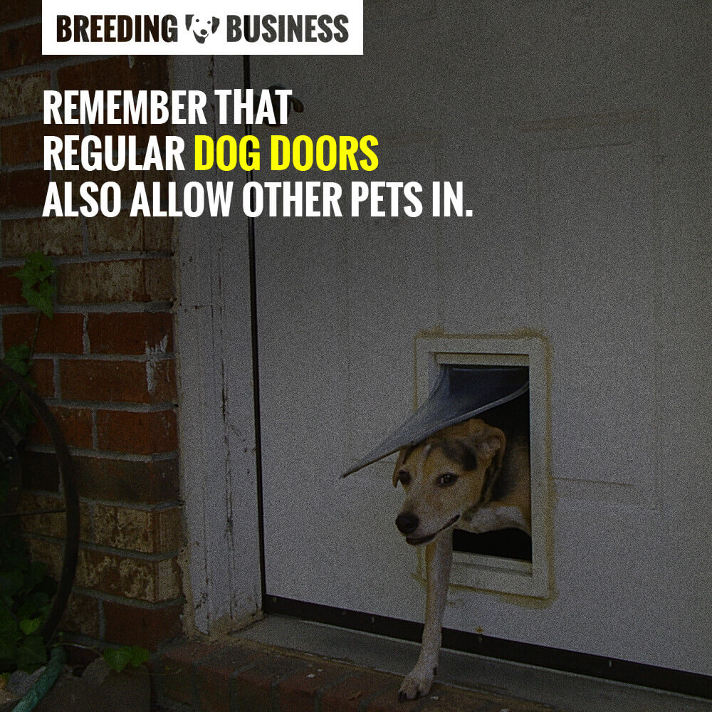 dog doors review