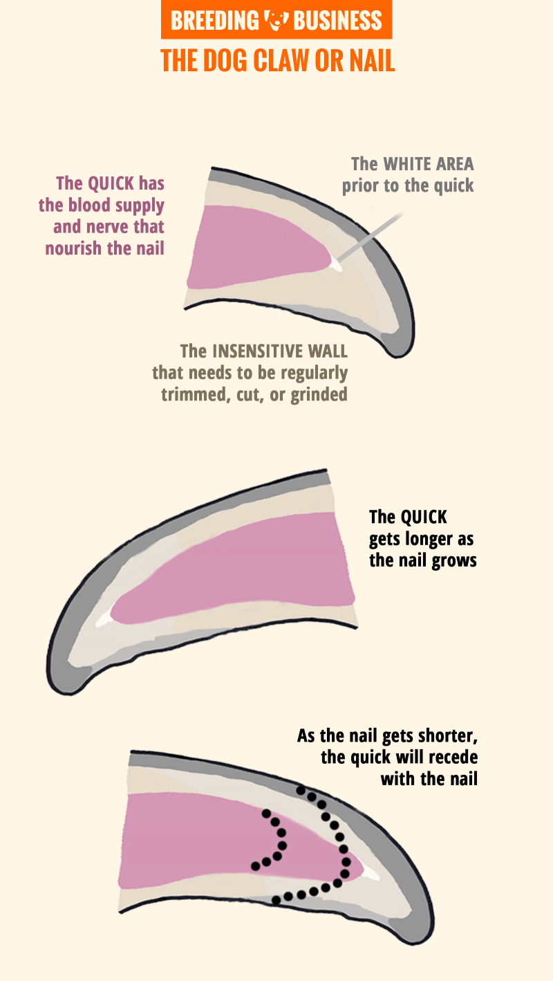 Dog Nail Clipping Infographic