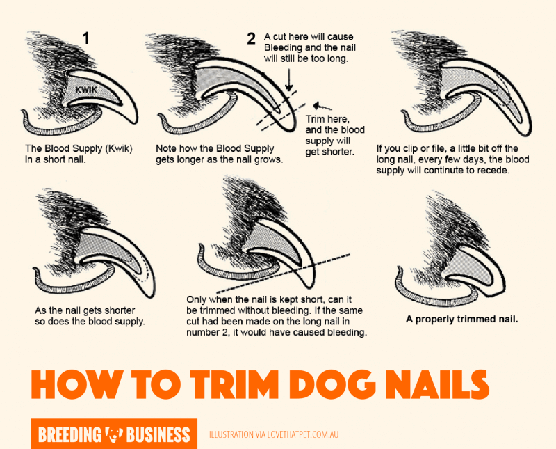how to cut dog nails