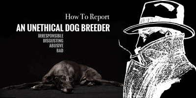 how to report an unethical dog breeder
