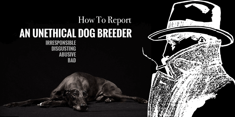 How to Report a Bad Dog Breeder? — Animal Cruelty & Poor