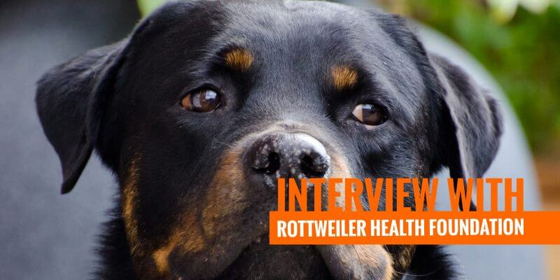 Interview with Roberta Rottweiler Health Foundation