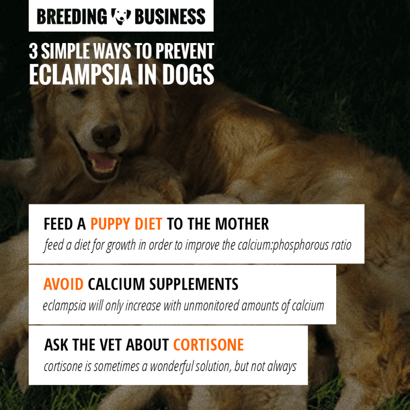 how to prevent eclampsia in dogs