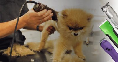 best dog clippers reviewed