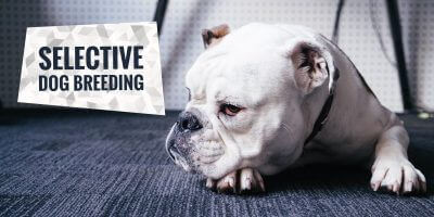 Selective Dog Breeding