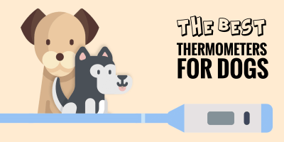Top 5 Best Dog Thermometers + Buying Guide