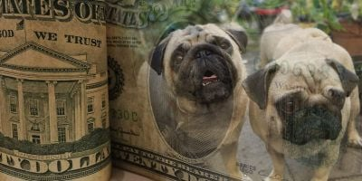 How Much Does It Cost To Be a Dog Breeder?