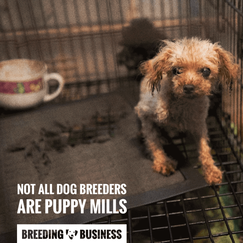 dog breeders vs puppy farmers