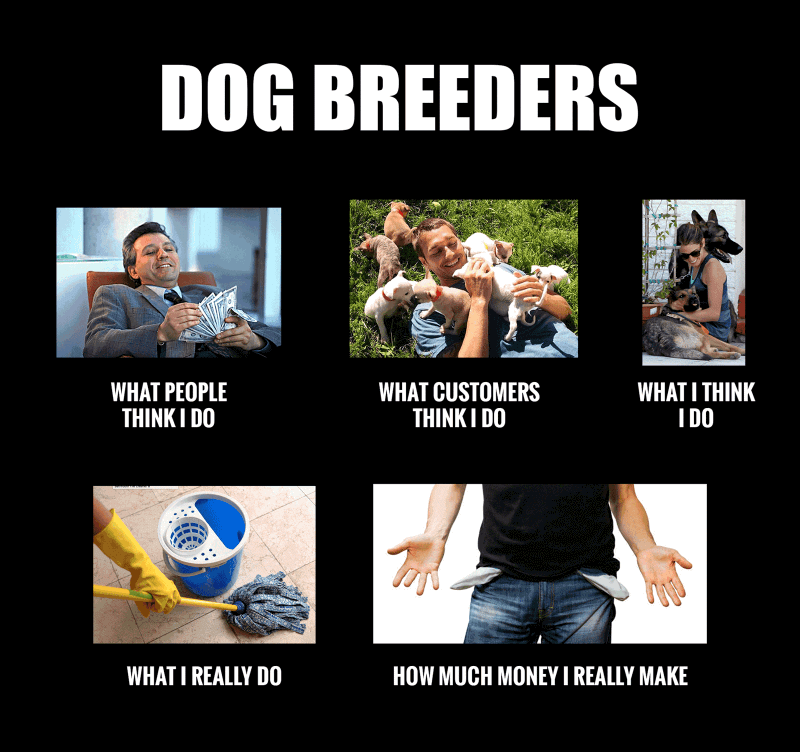 meme dog breeders