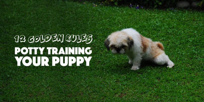 Potty Training a Puppy