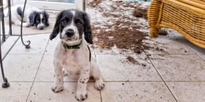 Separation Anxiety in Dogs and Puppies