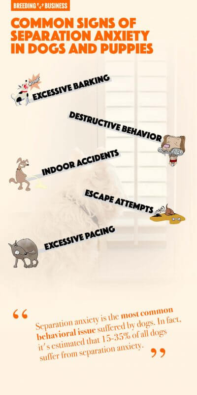 signs of separation anxiety in dogs and puppies (infographic)