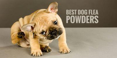 5 Best Dog Flea Powders – Fleabusters, Diatomaceous & More