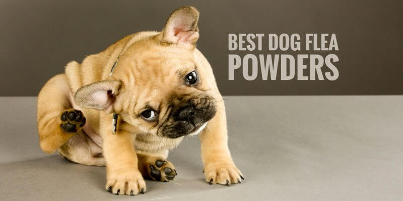 Best Dog Flea Powders