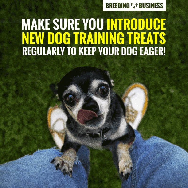 Introduce New Dog Training Treats