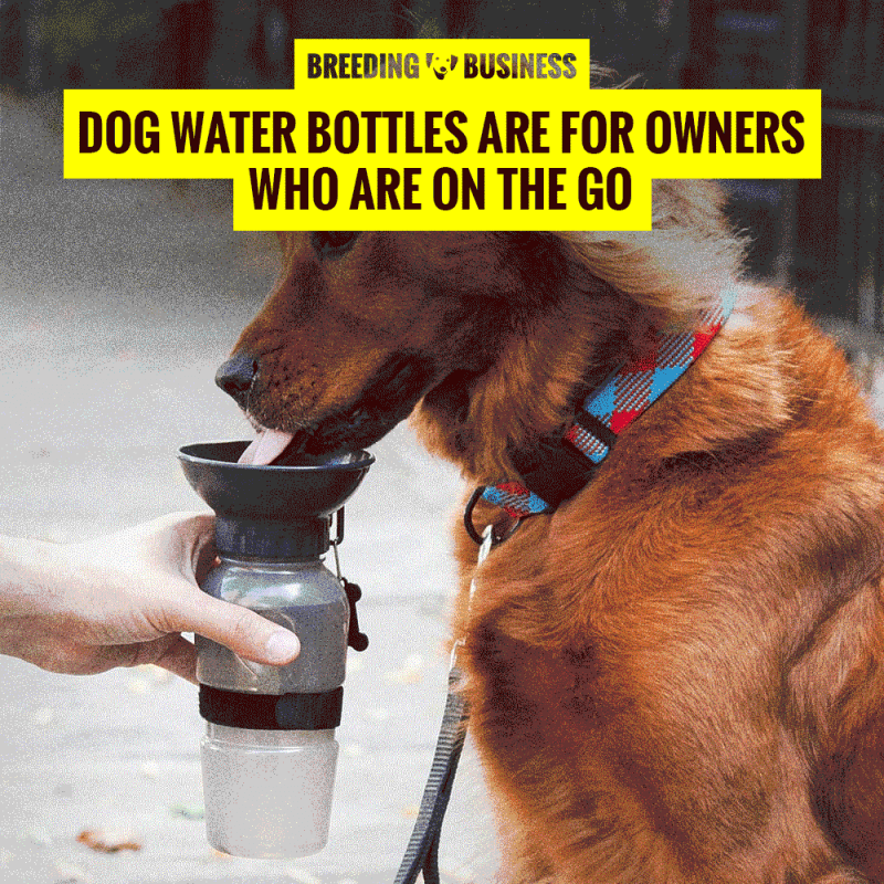 dog water bottles for travel