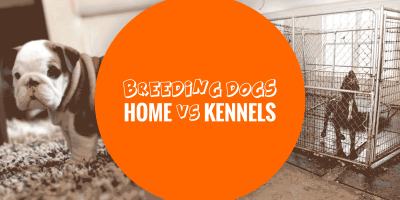 Breeding Dogs at Home, or Using Breeding Kennels?