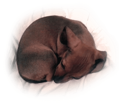 cold curled up puppy