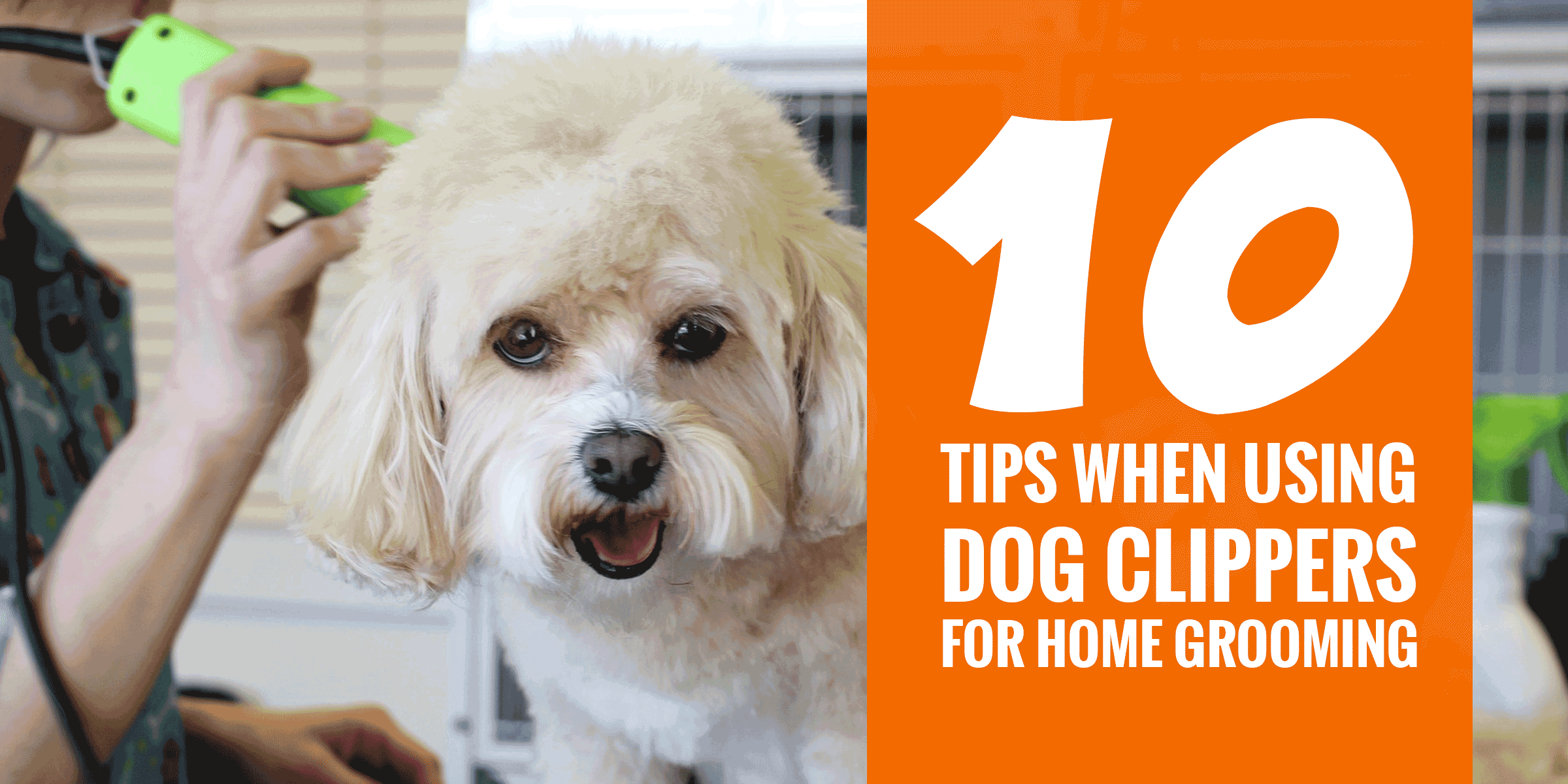 10 Super Tips For Using Dog Clippers For Home Grooming