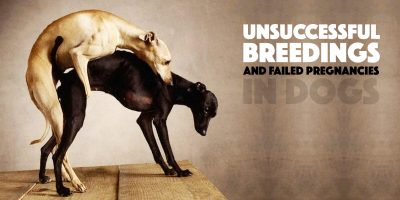 Why Is The Mating of Two Dogs Unsuccessful?