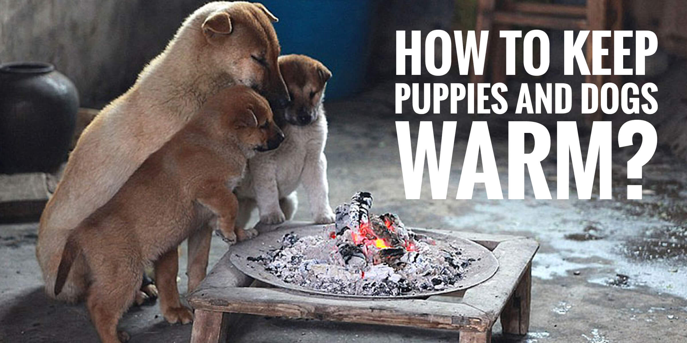 How To Keep Puppies and Dogs Warm?