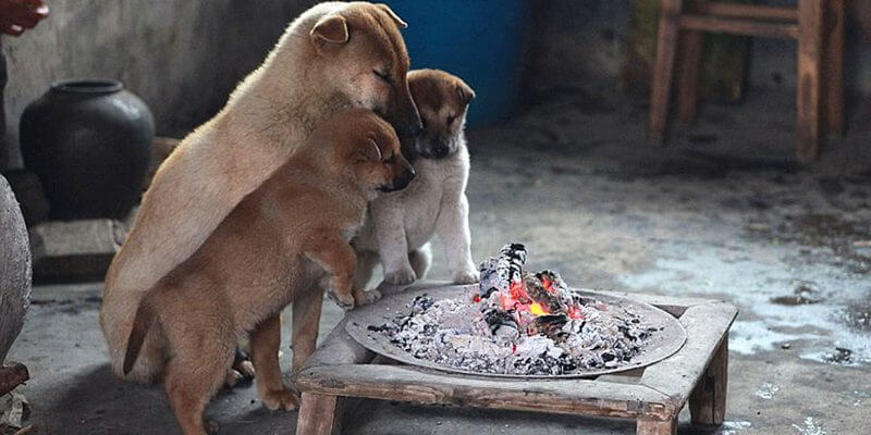 How To Keep Puppies Dogs Warm?