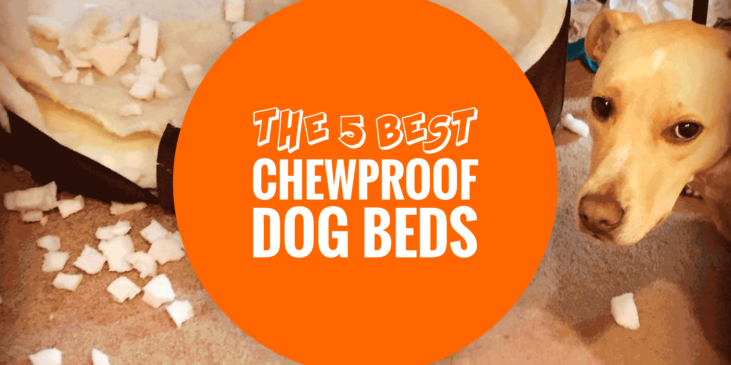 Top 5 best chewproof dog beds aluminum pvc ballistic for Best chew resistant dog bed