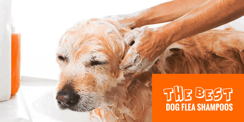 Top 5 Best Dog Flea Shampoos Against Ticks, Fleas & Lice ...
