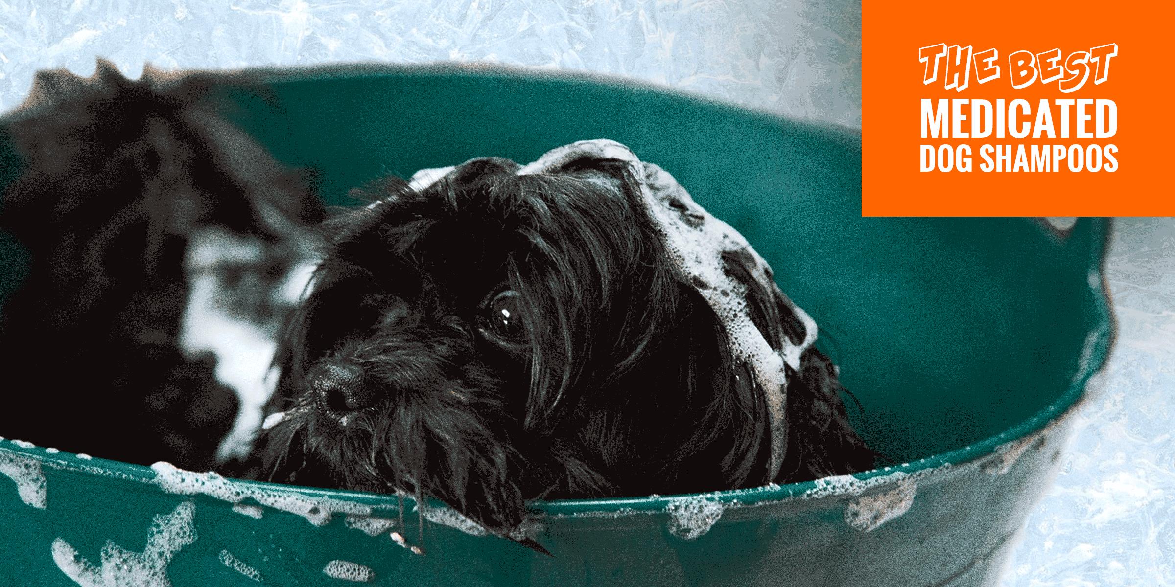 Best Medicated Dog Shampoos For Itchy Skin, Yeast, Mange & Parasites