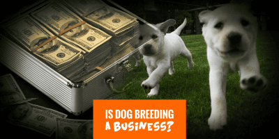 When Does Dog Breeding Become a Business?
